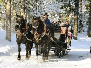 Prenotare una slitta trainata da cavalli è facile: +39 0474 972132