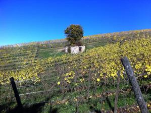 I vitigni dell'azienda agricola Vinica adagiati sulle colline molisane