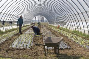Detenuti-chef cucinano i prodotti bio coltivati da migranti e disabili psichici